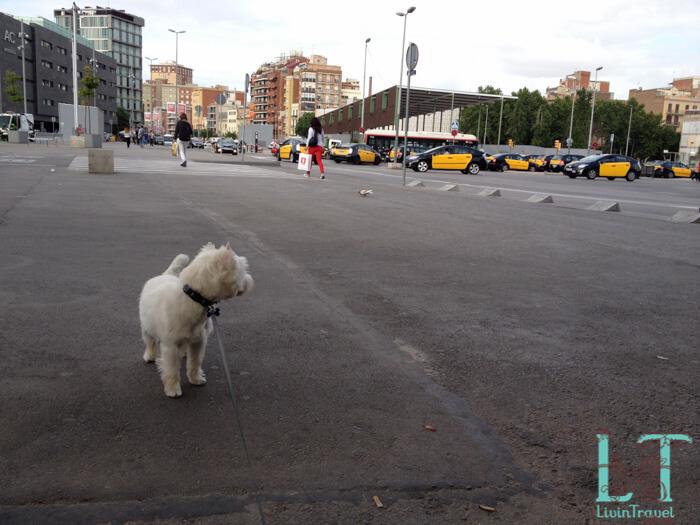 с собакой на такси в Барселоне