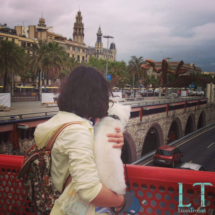 прогулка с собакой по Барселоне