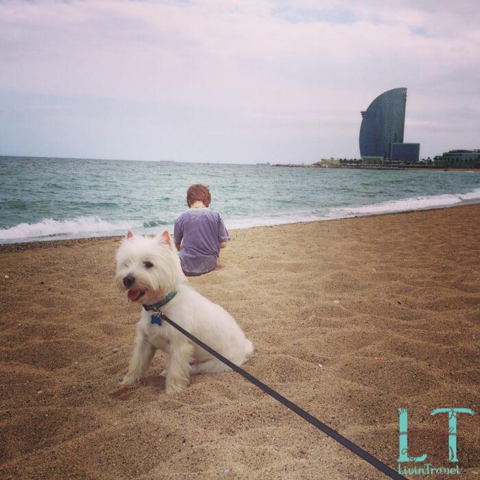 собака на пляже в Барселоне