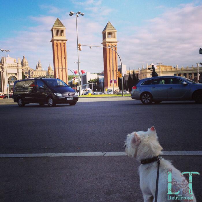 сбоака на площади Испании в Барселоне