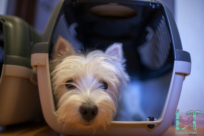 пластиковая переноска для собаки