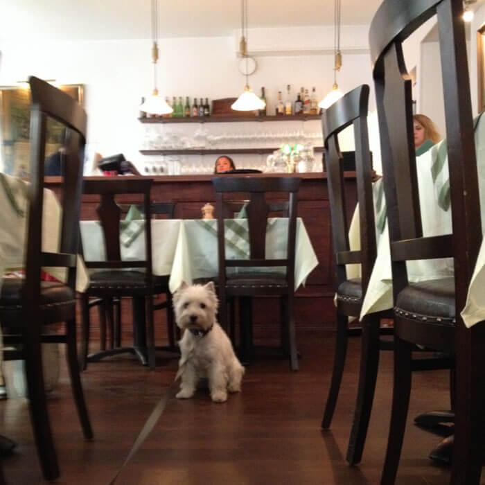 собака в кафе Slingerbulten в стокгольме