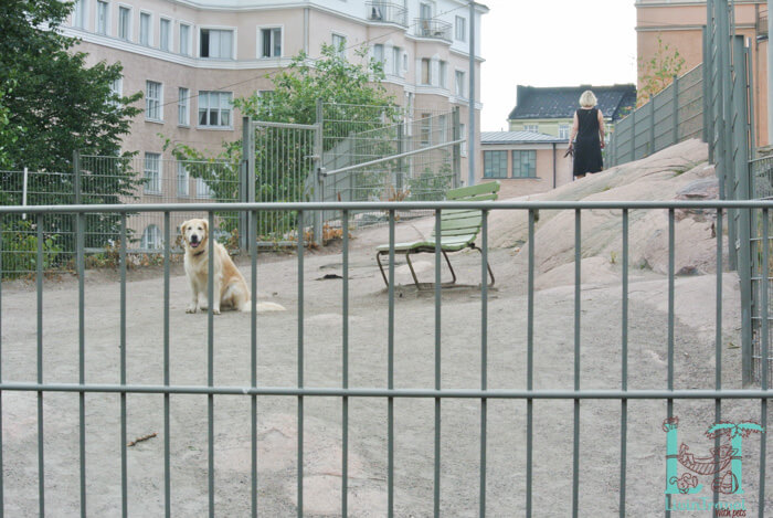 дог парк в центре хельсинки