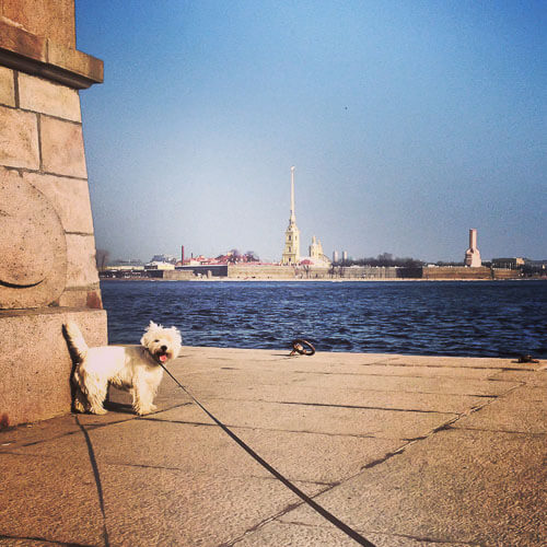 поездка с собакой в питер
