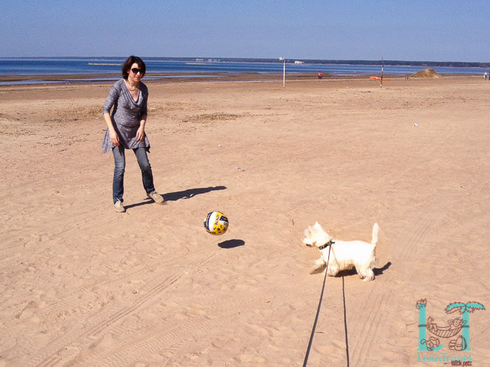 с собакой на финский залив