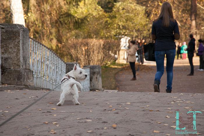 с собакой в павловский парк