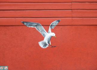 чайка на красной стене