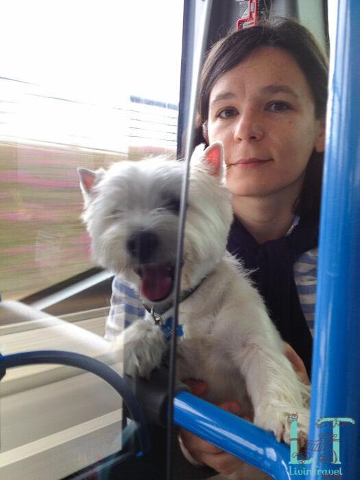 с собакой в автобусе в Барселоне
