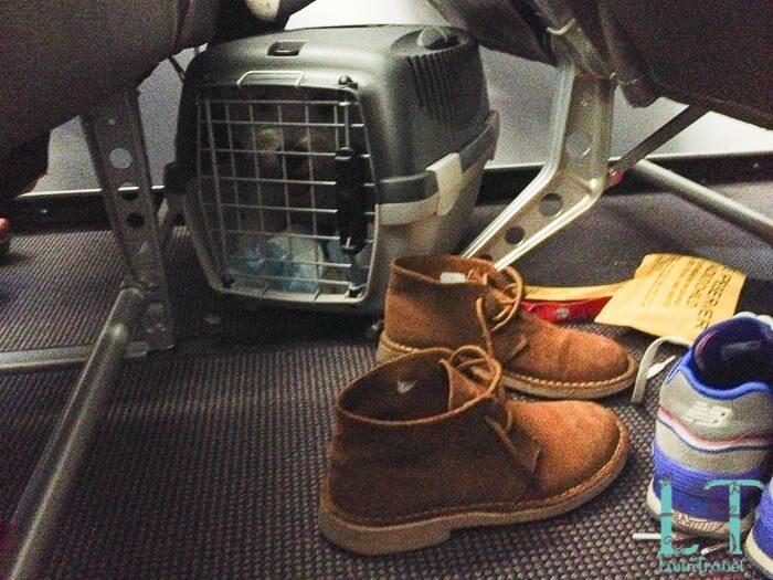 переноска Гулливер 1 в салоне самолета