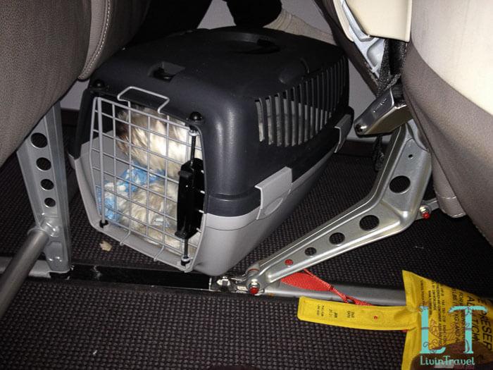 собака в переноске в самолете