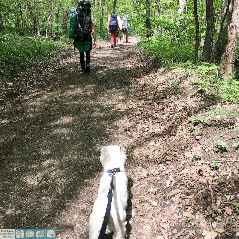 поход с собакой по крыму