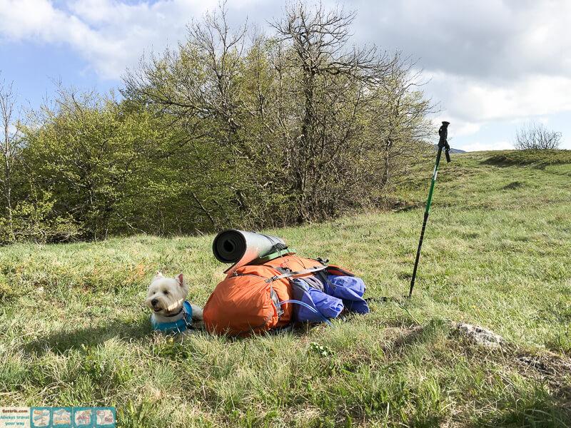 отдых в тени во время похода с собакой