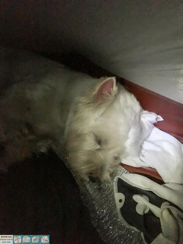 собака спит в палатке в походе