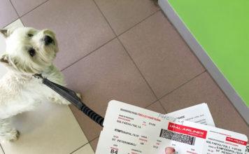 ural-airlines-pets