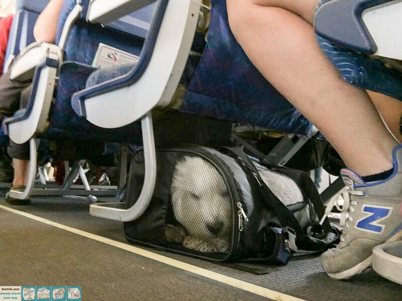 собака в мягкой переноске в самолете