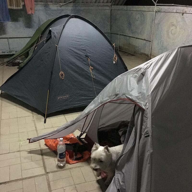 с собакой с палатке в крыму