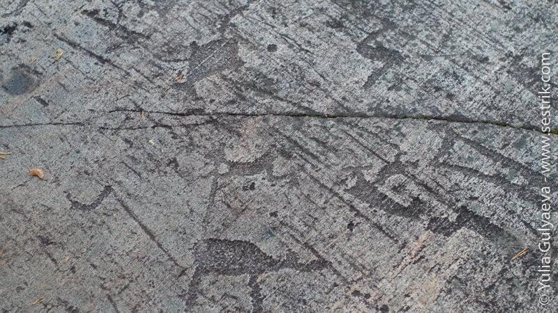 петроглифы животные