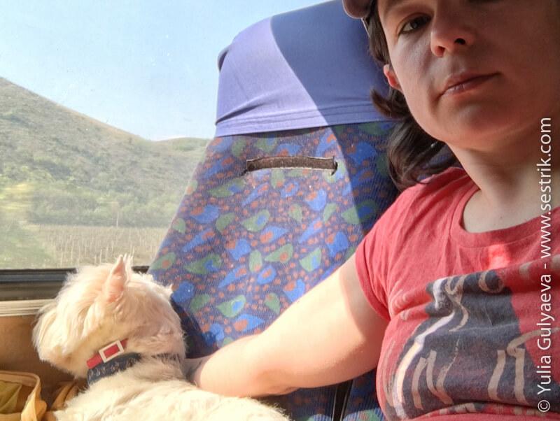 на автобусе с собакой по крыму