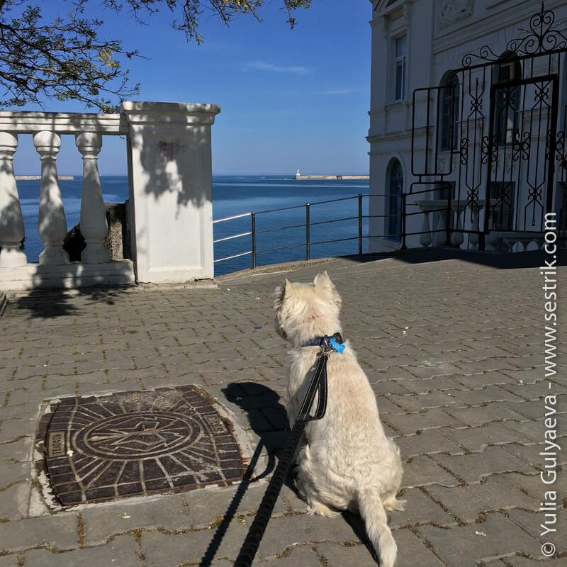 путешествие с собакой в севастополь
