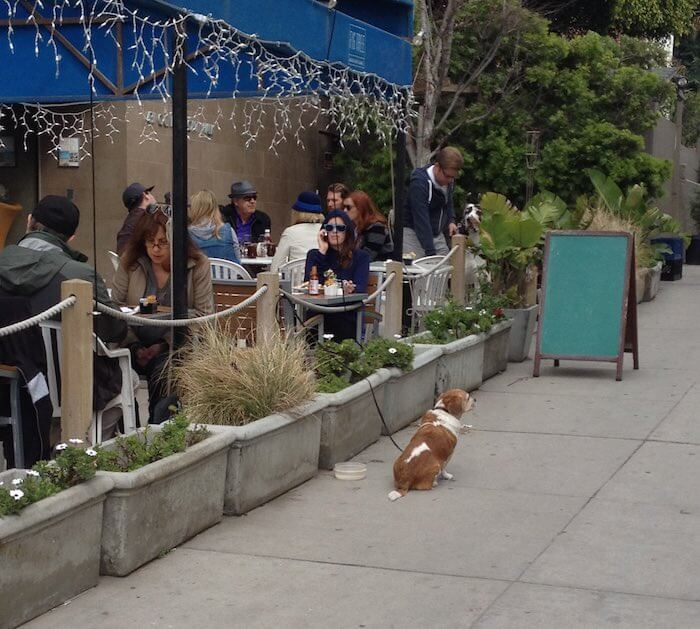 cafe-in-LA-with-dog
