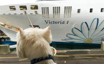 tallink-victoria с собакой