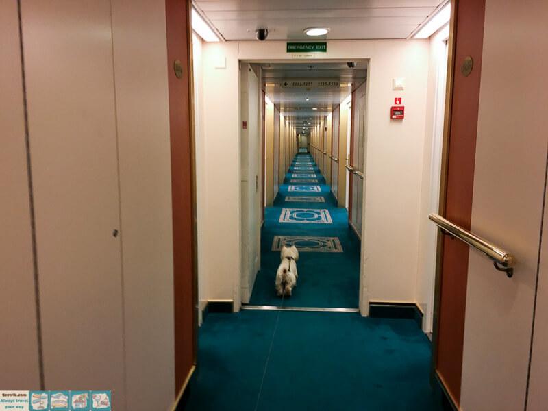 tallink-victoria-где можно собаке ходить на пароме