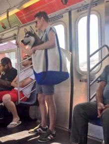husky-ny-subway