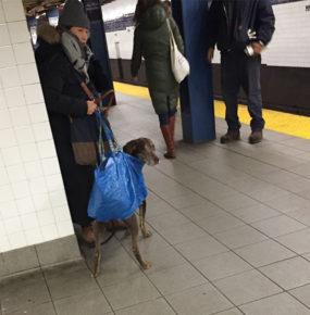 doginbag-ny-subway