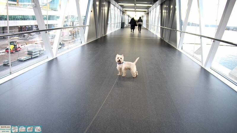 tallink-victoria-посадка с собакой на паром