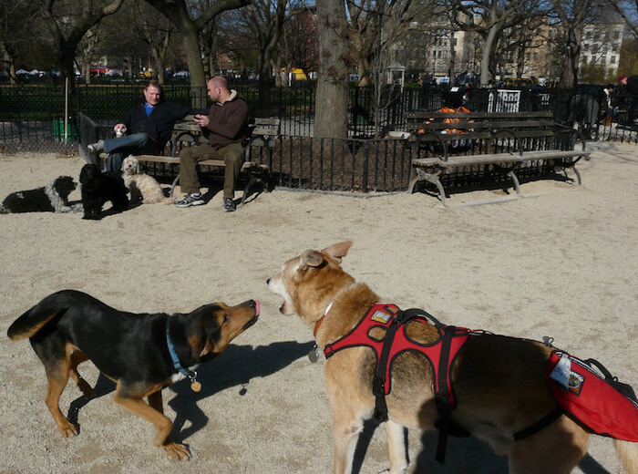 usa-dogpark