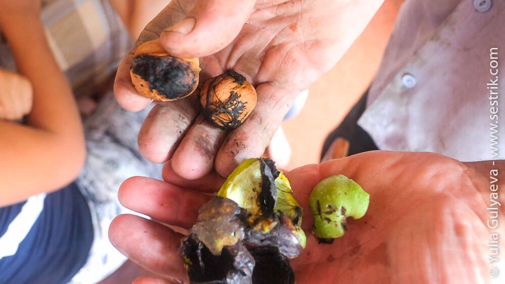 орехи в армении грецкий орех