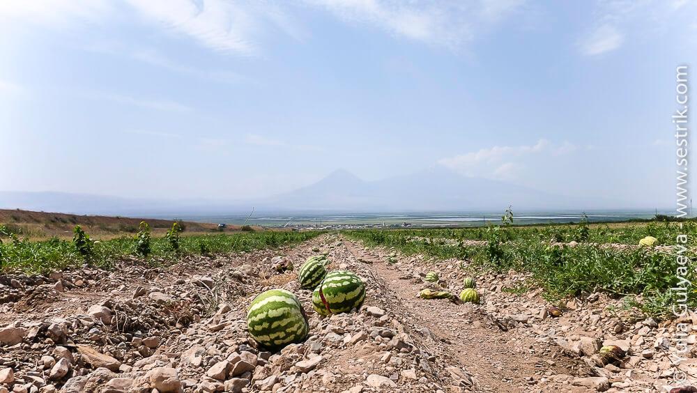 frukty-v-armenii-33-of-2