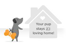 передержка для собак в америке