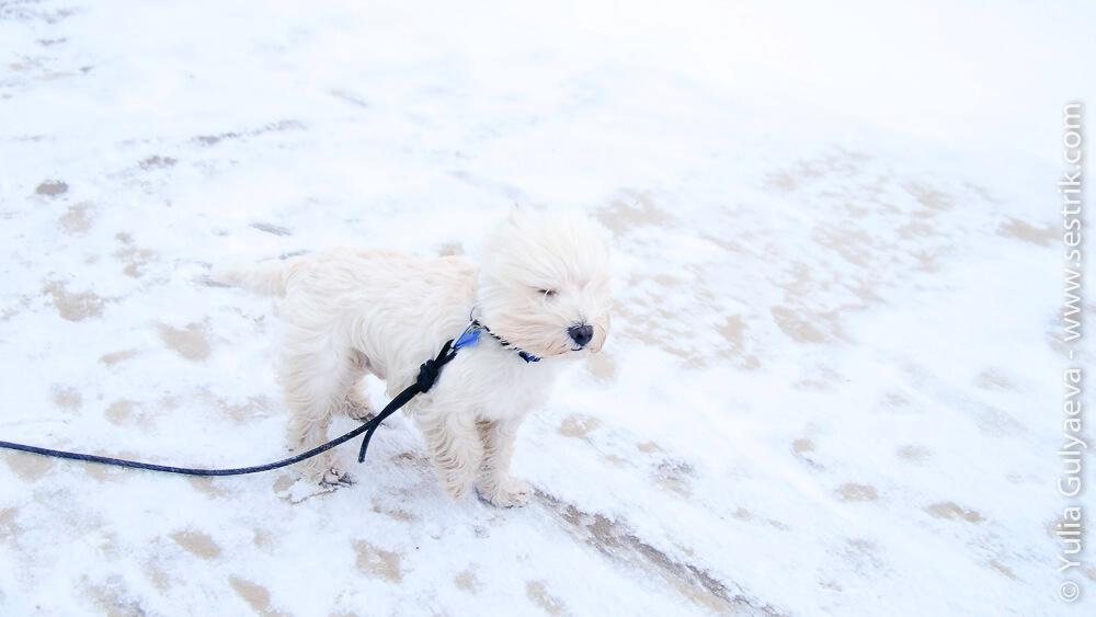 собака на пляже юрмалы зимой