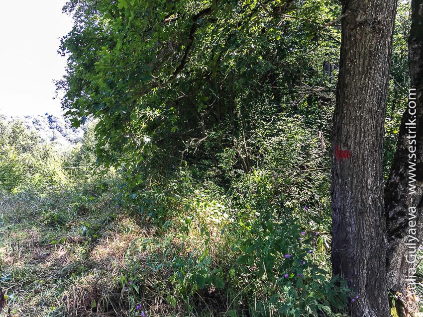 экотропа в парке дилижан