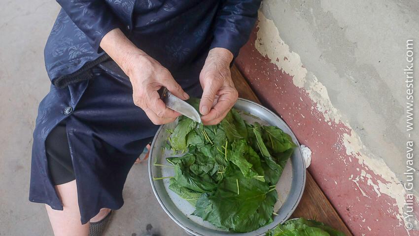 готовим листья для долмы