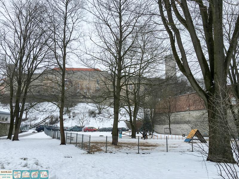 где гулять с собакой в Таллине