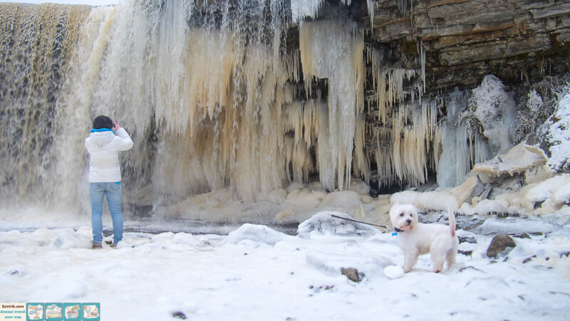 с собакой в эстонии зимой на водопаде