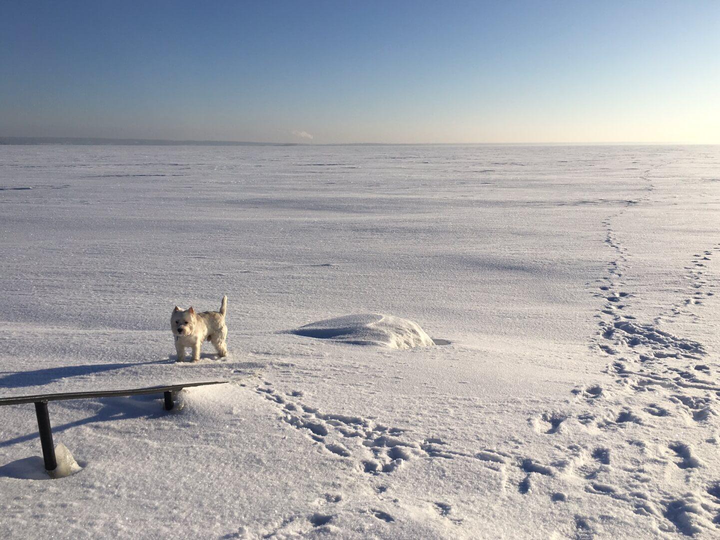 собака зимой в сибири мерзнет