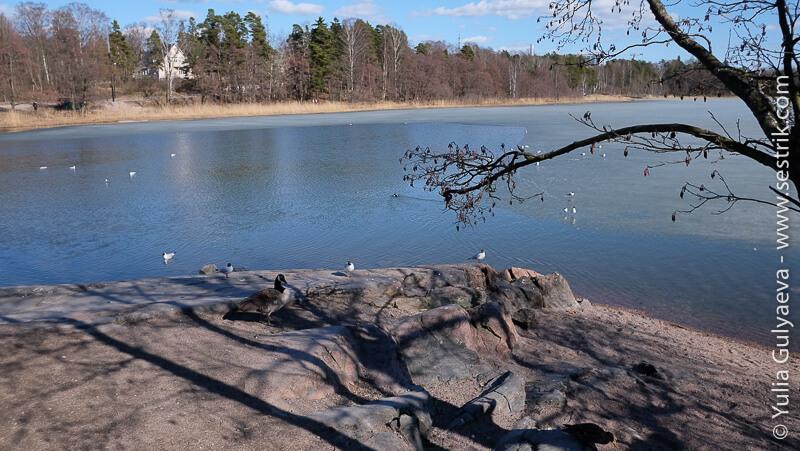 музей остров рядом с Хельсинки