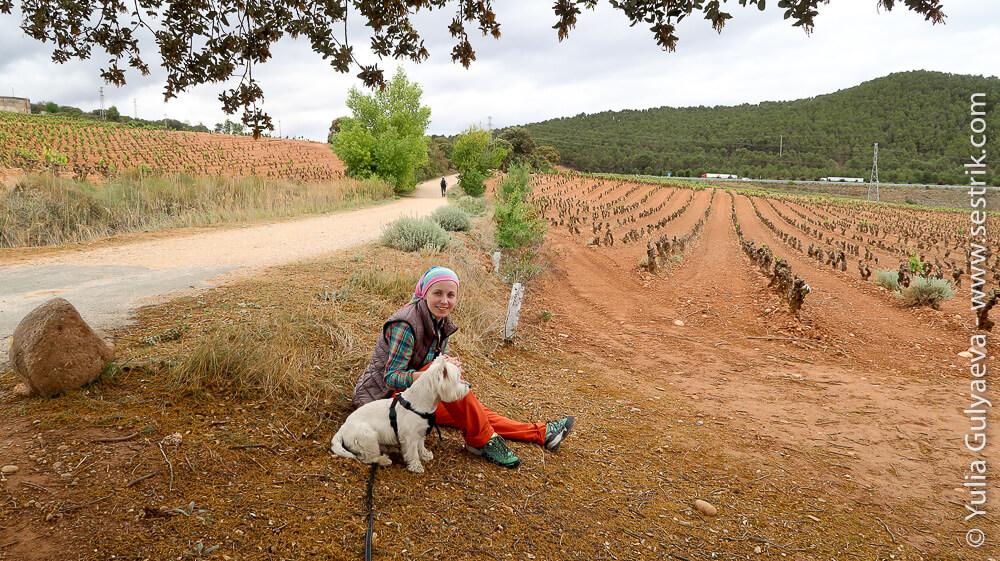 отдых в виноградных полях по пути сантьяго
