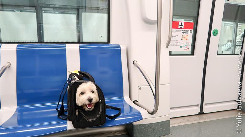 в метро барселоны с собакой