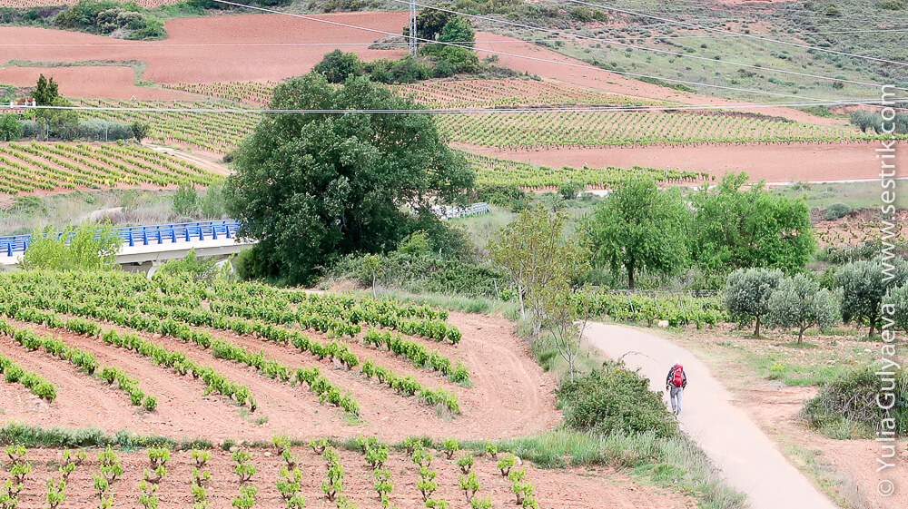 пилигрим среди виноградный полей на пути Сантьяго