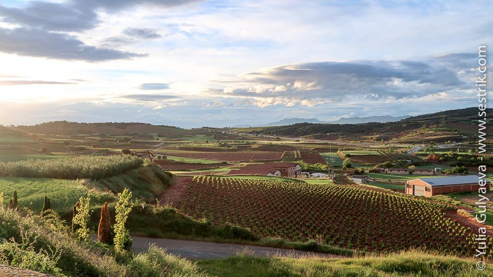 виноградные поля Риохи после дождя на закате