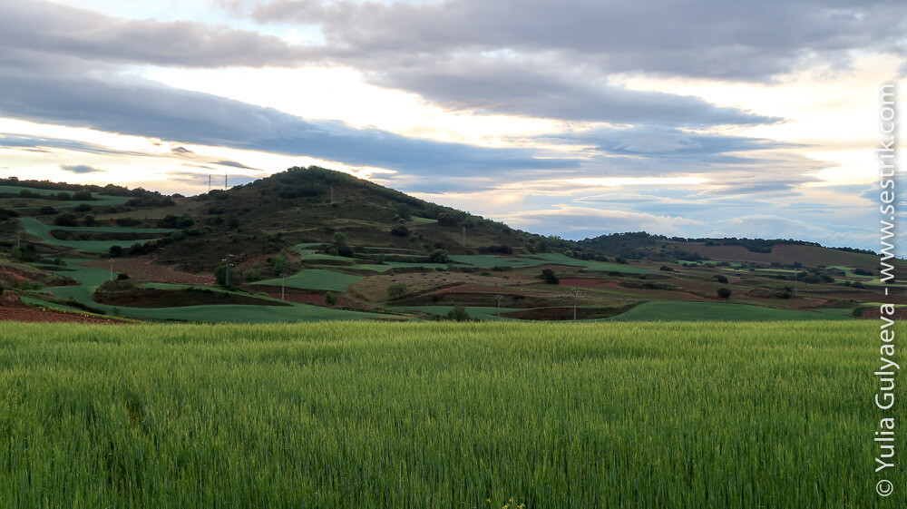 зеленые поля Риохи