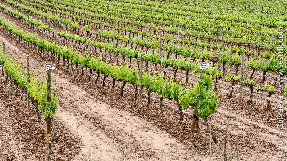 виноградники риохи