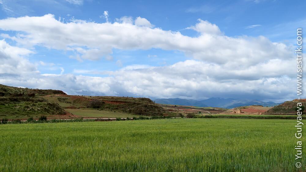 зеленые поля и горы Риохи