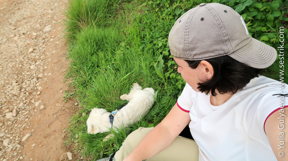 собака пилигрим в полях риохи