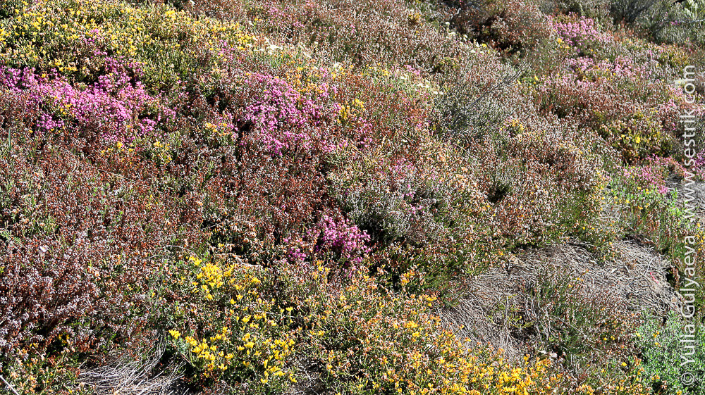 майское цветение на камино франсез