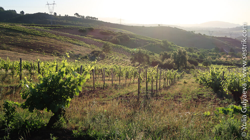 виноградники кастилья и леон